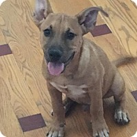 Adopt A Pet :: Kai - Glendale, AZ