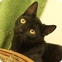 Adopt A Pet :: Pidgey - Colorado Springs, CO