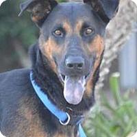 Adopt A Pet :: Gallagher - Newport Beach, CA