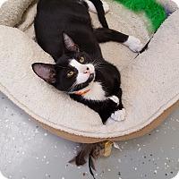 Adopt A Pet :: Batman - Danville, IN