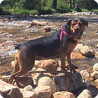 Adopt A Pet :: Mei - Salt Lake City, UT