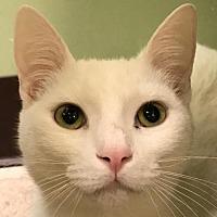 Adopt A Pet :: Tommy - Auburn, CA