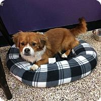 Adopt A Pet :: Newton - Thousand Oaks, CA