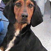 Adopt A Pet :: Henrietta - Maynardville, TN