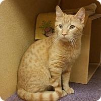 Adopt A Pet :: Gurr - Warrenton, MO