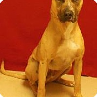 Adopt A Pet :: Dillinger - Gary, IN