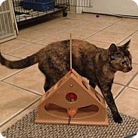Adopt A Pet :: BOO - 2013 - Hamilton, NJ