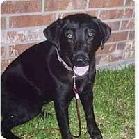 Adopt A Pet :: Julie - Kingwood, TX