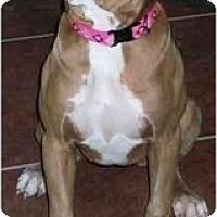 Adopt A Pet :: Cassy - Gilbert, AZ
