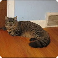 Adopt A Pet :: Page&Fabian - Clay, NY