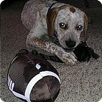Adopt A Pet :: Banjo - East Sparta, OH