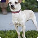 Adopt A Pet :: Molly