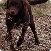 Adopt A Pet :: Hershey - Prole, IA
