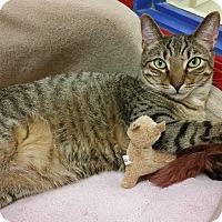 Adopt A Pet :: Sammie - Phoenix, AZ