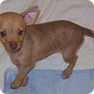 Adopt A Pet :: Ginger Girl