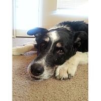 Adopt A Pet :: Pepper - Tempe, AZ