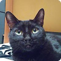 Adopt A Pet :: Ezra - New York, NY