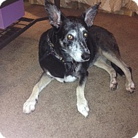 Adopt A Pet :: Sheila - Courtesy Post - Rochester/Buffalo, NY