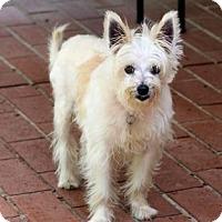 Adopt A Pet :: Nellie - Atlanta, GA