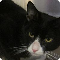 Adopt A Pet :: Tony'13 - New York, NY