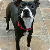 Adopt A Pet :: Princess - Lisbon, OH