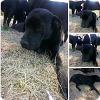 Adopt A Pet :: polar and Neal - EDEN PRAIRIE, MN