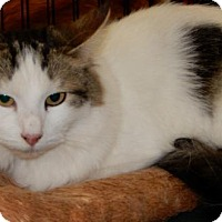 Adopt A Pet :: Madonna - Walnut Creek, CA