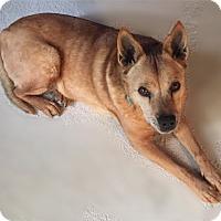 Adopt A Pet :: DeeJay - Las Vegas, NV