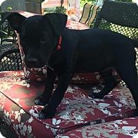Adopt A Pet :: Lenny - Randolph, NJ