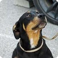 Adopt A Pet :: Liam - Joliet, IL