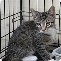 Adopt A Pet :: Brayden - Massapequa, NY