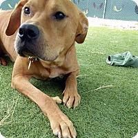 Adopt A Pet :: Mell - Purcellville, VA