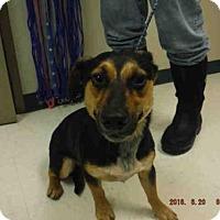 Adopt A Pet :: A568956 - Oroville, CA