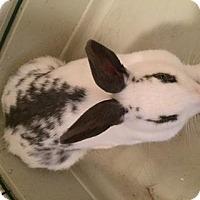 Adopt A Pet :: Suzie - Maple Shade, NJ