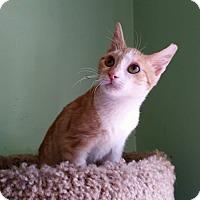 Adopt A Pet :: Toenibbler - Ogden, UT