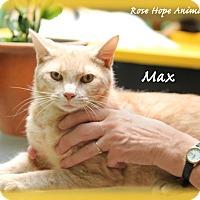 Adopt A Pet :: Max - Waterbury, CT