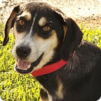 Adopt A Pet :: Vince - Oxford, MS