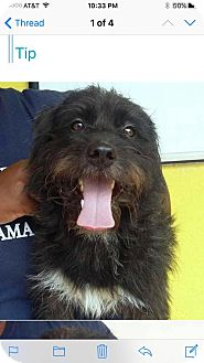 Terrier (Unknown Type, Medium) Mix Dog for adoption in Potomac, Maryland - Johnny