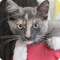 Adopt A Pet :: Petra - Hawthorne, CA