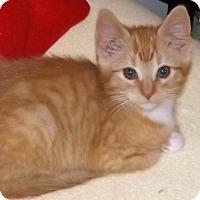 Adopt A Pet :: Justin - Salem, OR