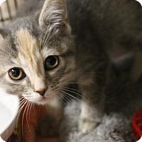 Adopt A Pet :: Piper - Medina, OH