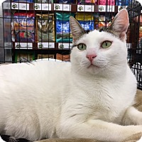 Adopt A Pet :: Angie - Pasadena, CA
