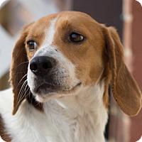 Adopt A Pet :: Jackson - Burlington, NC