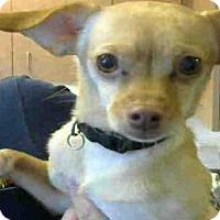 Adopt A Pet :: * BOB MARLEY - Sacramento, CA