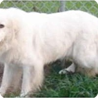 Adopt A Pet :: Tinker SPONSORED - Bloomington, IL