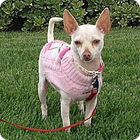 Adopt A Pet :: Giselle - Lake Elsinore, CA