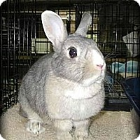 Adopt A Pet :: Lily - Williston, FL