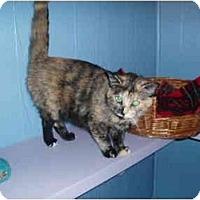 Adopt A Pet :: Edith Ann - Hamburg, NY