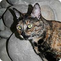 Adopt A Pet :: Peanut - Richland, MI