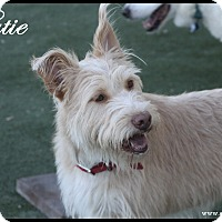 Adopt A Pet :: Katie - Rockwall, TX